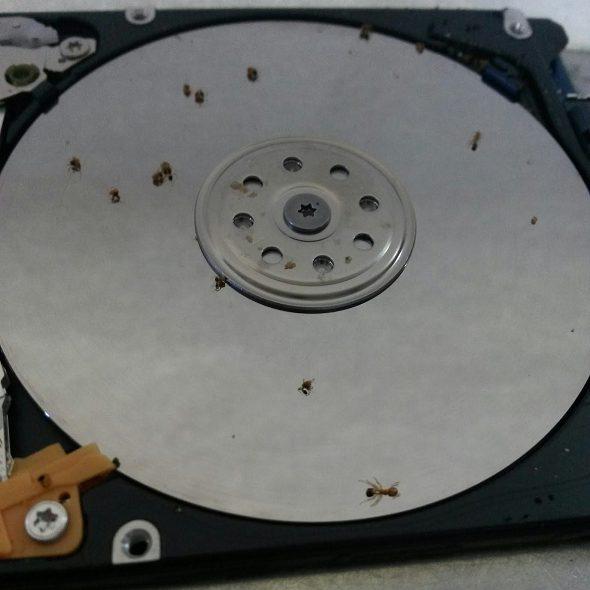 ¿Cómo entran las hormigas en un disco duro?